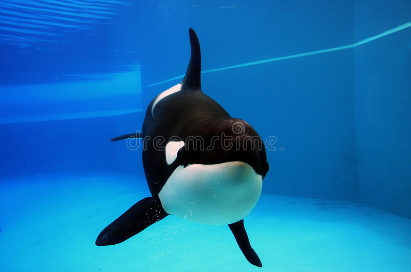 Why SeaWorld Needs to Stop