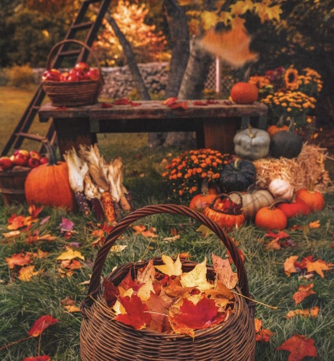 Things To Do In The Fall Time That Just Complete It All!